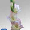 gladiol-flowerbulbs