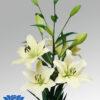 lilium-courier-flowerbulbs