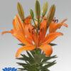 orange-matrix-potlilium