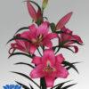 lilium-profundo-ot-flowerbulbs