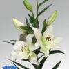 lilium-richmond-flowerbulbs