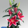 lilium-yasmine-flowerbulbs
