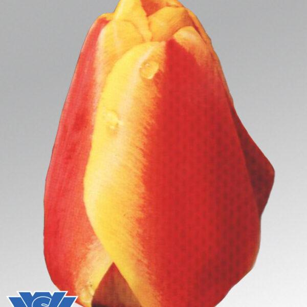 tulip apeldoorn elite